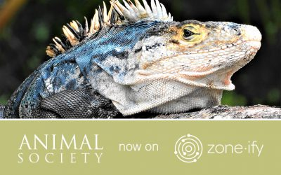"""Learn the Science of Animals with Zone•tv and """"Animal Society"""" on the Zone•ify Outdoors Channel"""